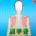 肩甲骨が悪いと関係がある頭痛、耳鳴り、目の疲れ