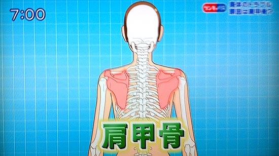 肩甲骨に繋がっている筋肉は30以上