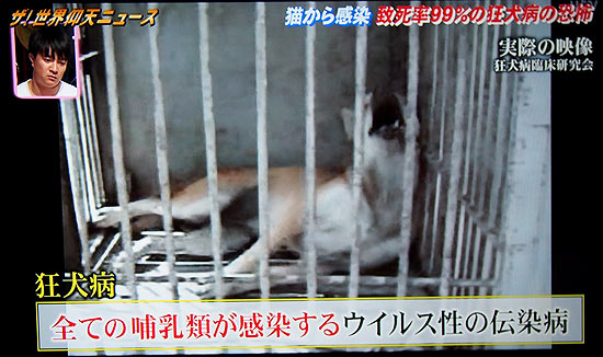 猫に狂犬病を移された