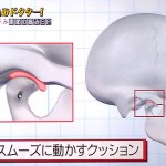 あごと下あごの間にある関節炎板