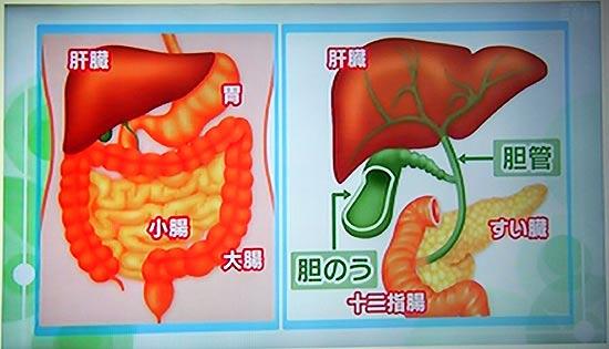 胆のう、胆管がんの場所の勉強