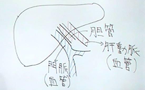 肝臓には三つの経路