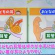 子供が中耳炎を起こしやすい理由は耳管が水平だから