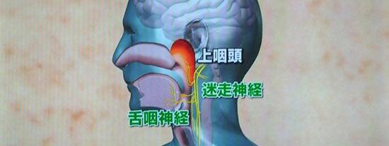 舌咽神経と迷走神経がどこを走っているか